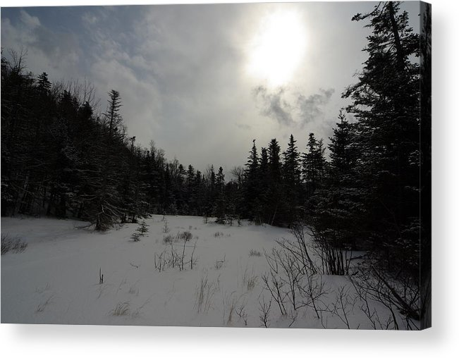 Nature Acrylic Print featuring the photograph Winter Woods by Eric Workman