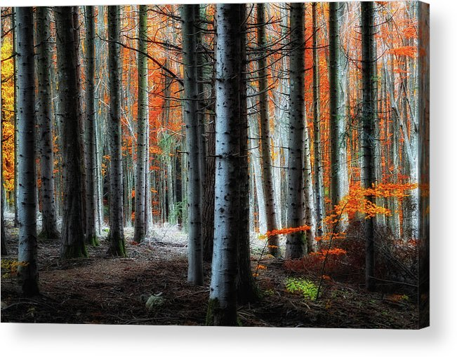 Forest Acrylic Print featuring the photograph Fire!! by Francesco Martini