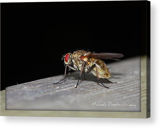 Nature Acrylic Print featuring the photograph In The Dark by Michaela Preston