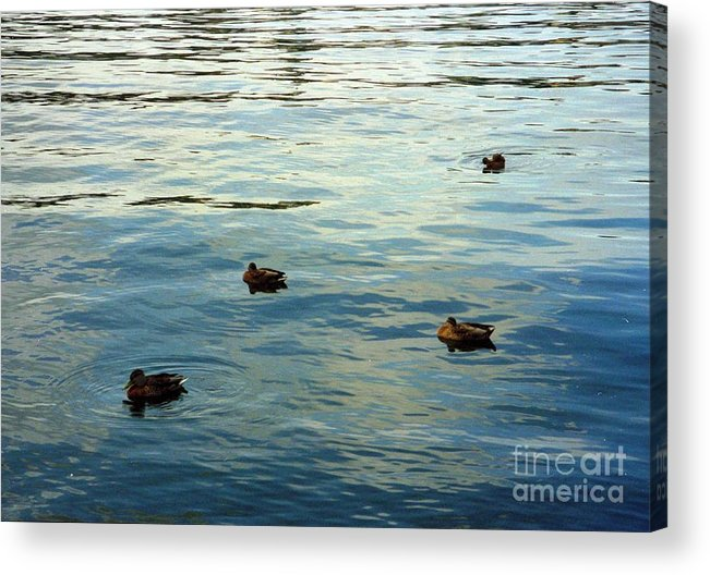 Sweden Acrylic Print featuring the photograph Stockholm City Harbor by Ted Pollard