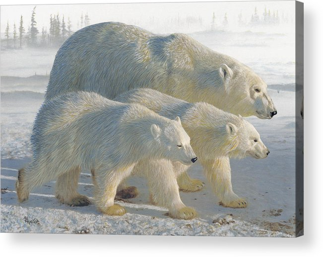 Polar Bear Acrylic Print featuring the drawing A Chill Wind by Brent Ander