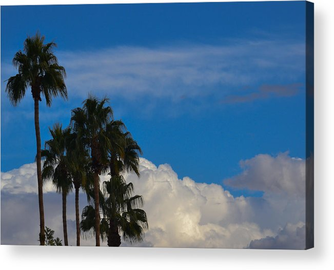 Palm Trees Acrylic Print featuring the photograph Above The Clouds by Ross Jamison