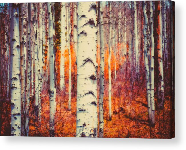 Aspen Acrylic Print featuring the photograph Aspenglow by Roger Chenery