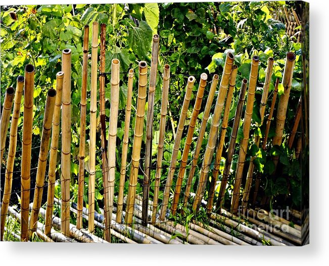 Bamboo Acrylic Print featuring the photograph Bamboo Fencing by Lilliana Mendez