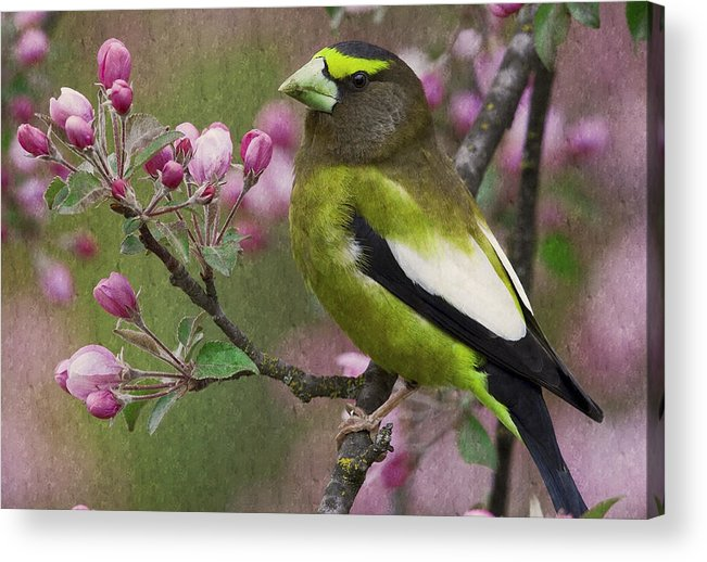Bird Acrylic Print featuring the photograph Bird 5 by Ingrid Smith-Johnsen
