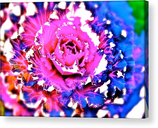 Cabbage Gone Abstract Acrylic Print featuring the photograph Can We Eat This? by Ira Shander