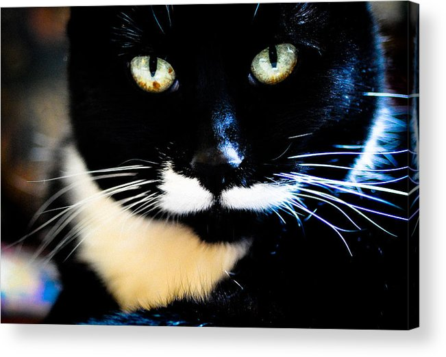Cat Acrylic Print featuring the photograph Cats Eyes by Ronda Broatch