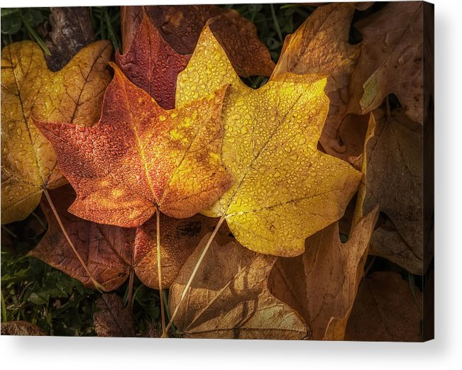 Leaf Acrylic Print featuring the photograph Dew On Autumn Leaves by Scott Norris