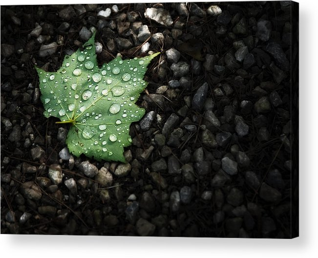 Leaf Acrylic Print featuring the photograph Dew On Leaf by Scott Norris