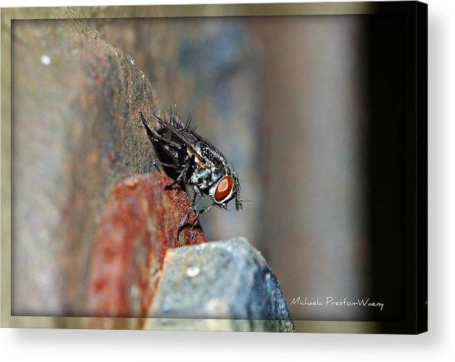Nature Acrylic Print featuring the photograph Down View by Michaela Preston