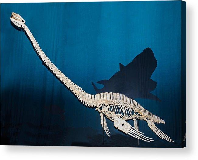 elasmosaurus acrylic print by millard h sharp