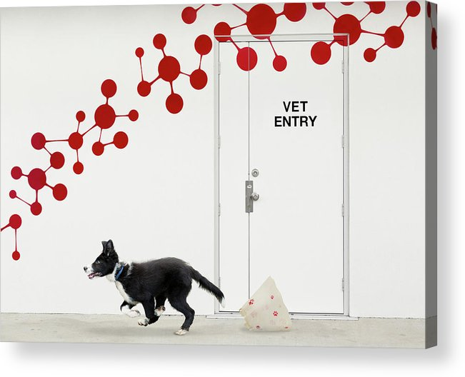 Dog Acrylic Print featuring the photograph Escape At The Vet by Jacqueline Hammer