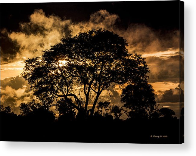 Botswana Acrylic Print featuring the photograph Fire In The Sky by Nancy D Hall