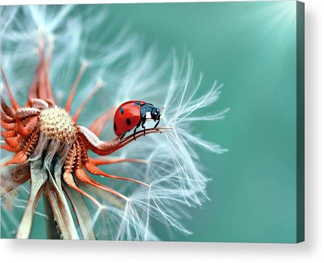 Ladybug Acrylic Print featuring the photograph Freedoom by Mustafa ?zt?rk