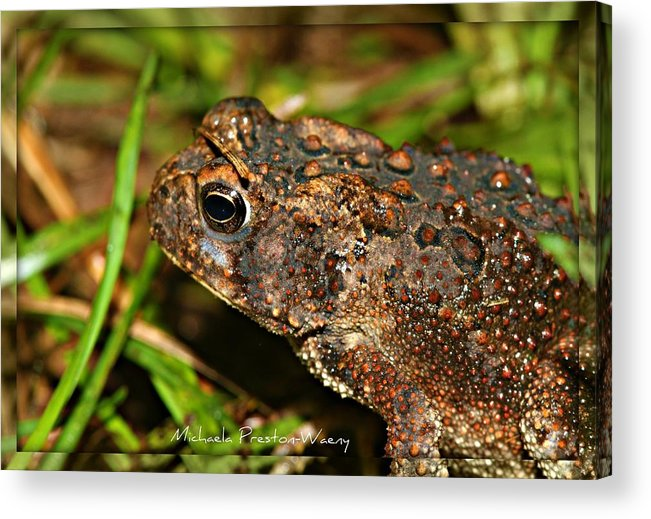 Nature Acrylic Print featuring the photograph Frog 2 by Michaela Preston