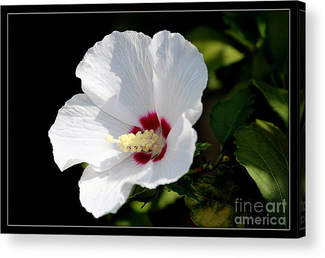 Flowers Acrylic Print featuring the photograph Hibiscus by Irina Hays