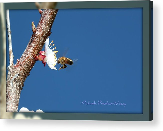 Macro Acrylic Print featuring the photograph In The Sky by Michaela Preston