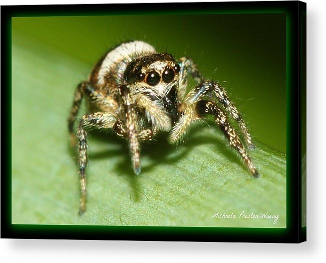 Nature Acrylic Print featuring the photograph Jumping Spider by Michaela Preston