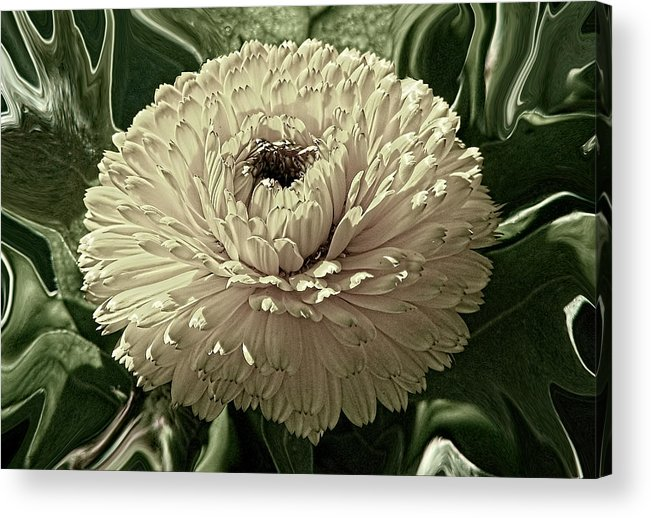 Digital Acrylic Print featuring the digital art Looking Back by Wendy J St Christopher