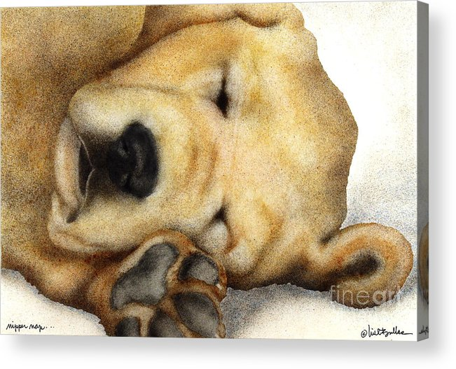 Will Bullas Acrylic Print featuring the painting Nipper Nap... by Will Bullas