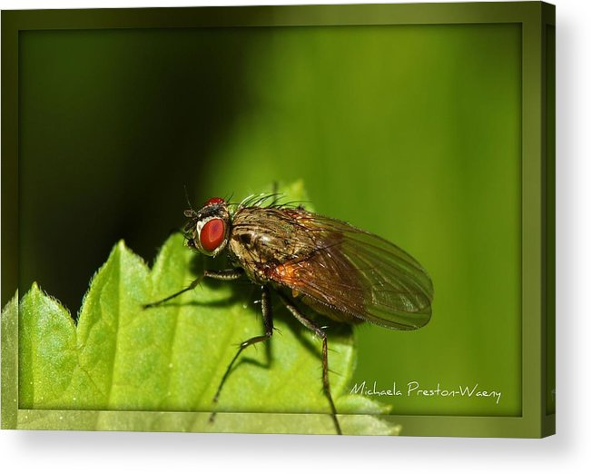 Nature Acrylic Print featuring the photograph Resting by Michaela Preston