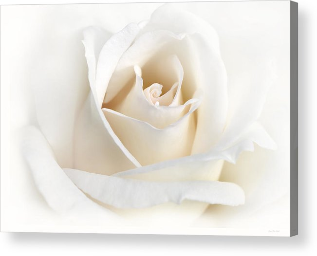 Rose Acrylic Print featuring the photograph Soft Ivory Rose Flower by Jennie Marie Schell