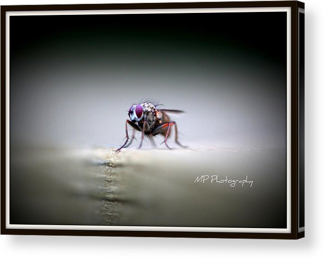Macro Acrylic Print featuring the photograph Waiting by Michaela Preston