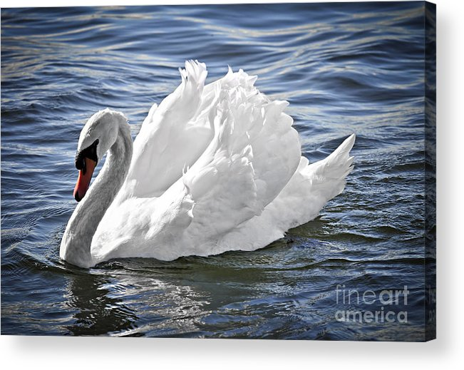 Swan Acrylic Print featuring the photograph White Swan On Water by Elena Elisseeva