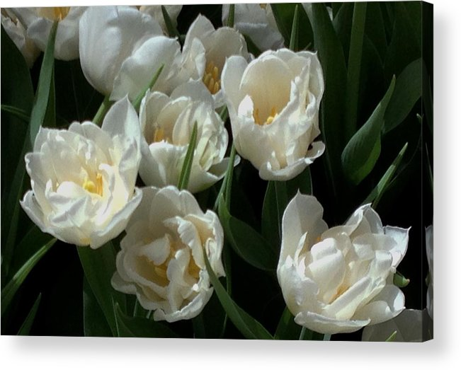 Garden Acrylic Print featuring the photograph White Tulips In The Garden by Jan Moore