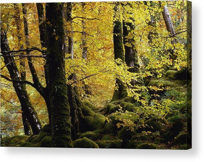 Autumn Acrylic Print featuring the photograph Glenveagh National Park, County by Gareth McCormack