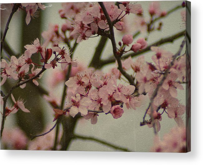 Flowers Acrylic Print featuring the photograph Sweet Spring by Terrie Taylor