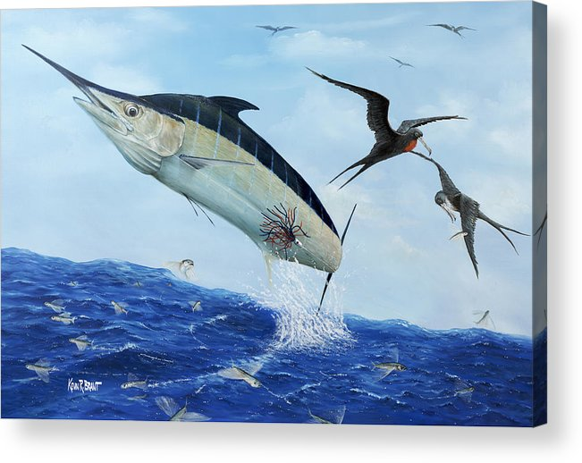 Blue Marlin Acrylic Print featuring the painting Airbourne by Kevin Brant