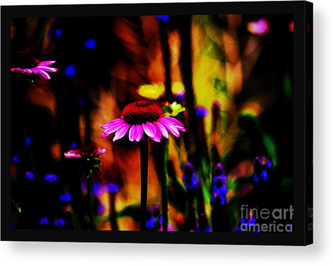 Botanical Portrait Acrylic Print featuring the photograph Astral Dream by Susanne Still