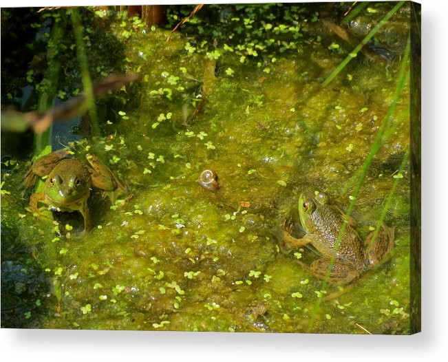 Frog Acrylic Print featuring the photograph Back And Forth by Azthet Photography