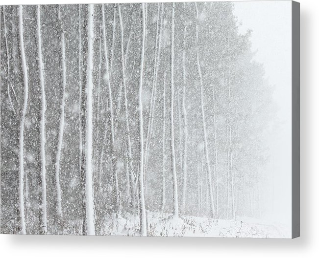 Horizontal Acrylic Print featuring the photograph Blizzard Blankets Trees In Snow by Douglas MacDonald
