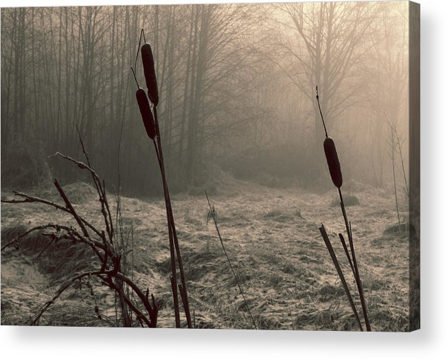 Cattails Acrylic Print featuring the photograph Cattails by Barbara White