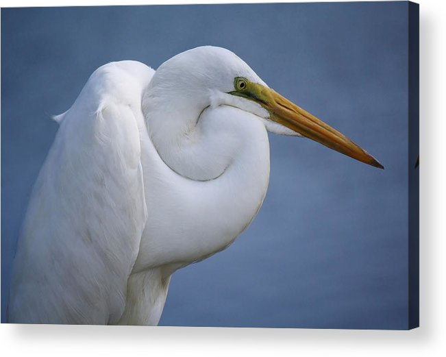 Huntington Beach Acrylic Print featuring the photograph Great White Egret by Paulette Thomas
