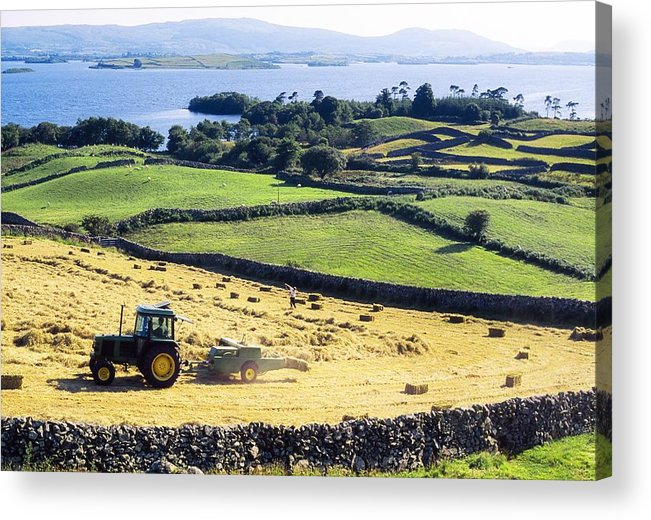 Animal Feed Acrylic Print featuring the photograph Hay Making, Lough Corrib, Co Galway by The Irish Image Collection