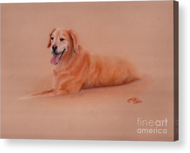 Golden Retriever Acrylic Print featuring the pastel Maddie  by Tonia Antilla