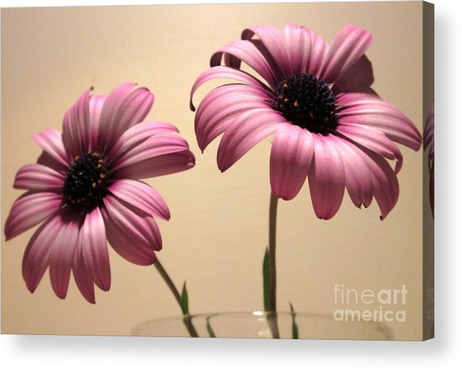 Acrylic Print featuring the photograph Pink Peas In A Pod by Miss McLean