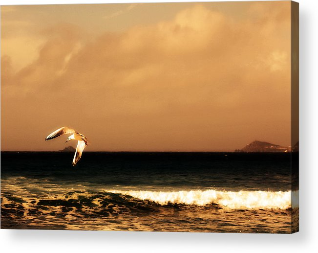 Seagull Acrylic Print featuring the photograph Sennen Seagull by Linsey Williams