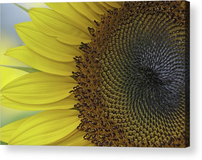 Bright Acrylic Print featuring the photograph Sunshine by Ken Shuster