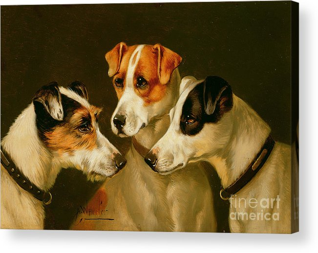 Dog Acrylic Print featuring the painting The Hounds by Alfred Wheeler