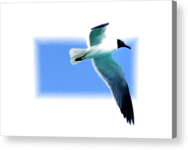 Seagull Acrylic Print featuring the photograph Turks 16 by Allan Rothman