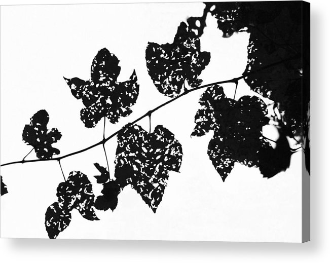 Leaf Acrylic Print featuring the photograph 080506-22 by Mike Davis