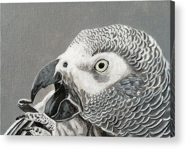 Acrylic Print featuring the painting African Grey Parrot by Pio De Lima