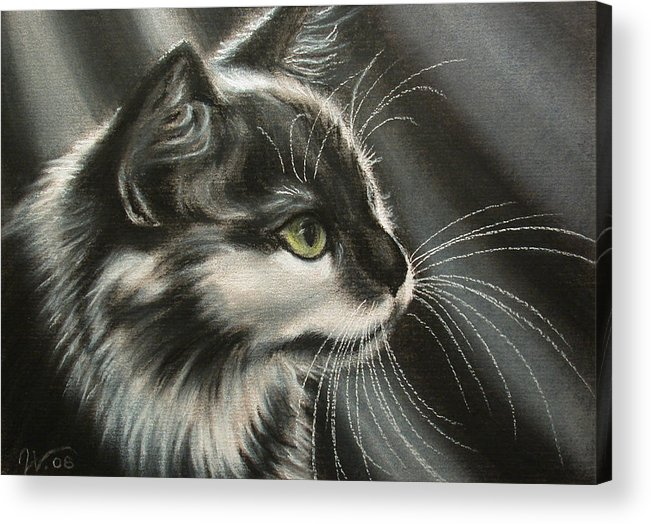 Cat Acrylic Print featuring the painting Black-white by Valentina Vassilieva