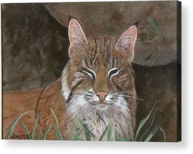 Cat Acrylic Print featuring the painting Bob Cat by Peggy Conyers