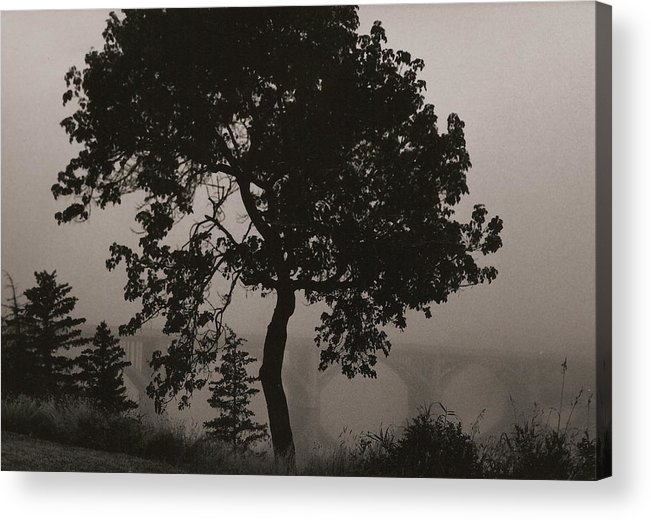 Elm Acrylic Print featuring the photograph Dark Elm By River by Arnold Isbister