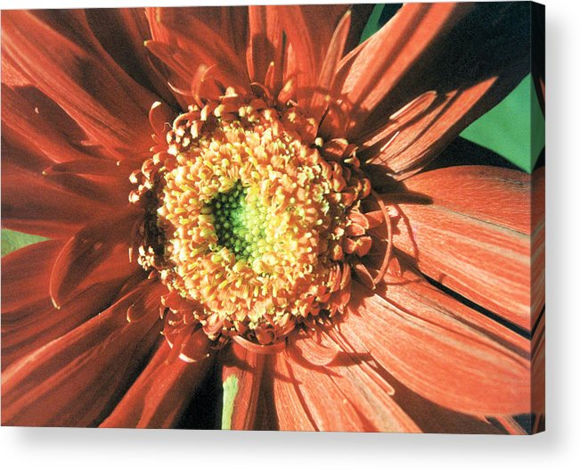 Floral Acrylic Print featuring the photograph Explosion by Jan Amiss Photography